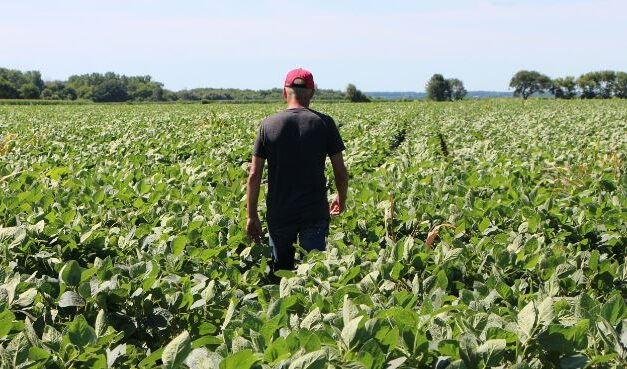 Should China Be Able to Purchase American Farmland?